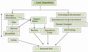 Schematic Diagram To Show The Processes Involved In Soil