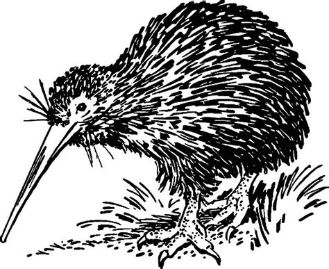 hungry kiwi bird   food coloring pages
