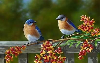 Birds Desktop Colorful Themes Wallpapertag