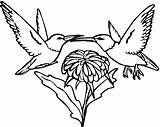 Hummingbird Coloring Pages Printable Humming Bird Swallow Adults Hummingbirds Adult Tailed Drawings Print Getdrawings Getcolorings Flowers Designlooter Getcoloringpages Popular 613px sketch template