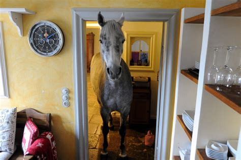 forget  barn  horse lives   house photo