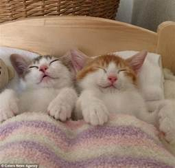stop cat from on bed kittens in japan can t sleep unless they cosy up together