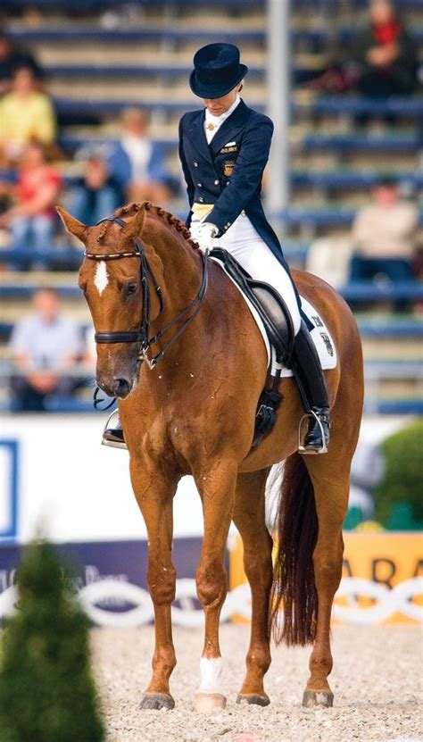 dressage horses horse training riding test tips equestrian ride chestnut winning exercises horseback saddle pony sport dressagetoday judges level quotes