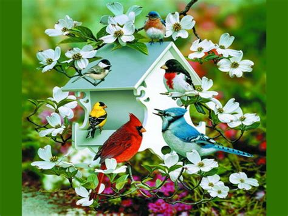 spring birds birds animals background wallpapers