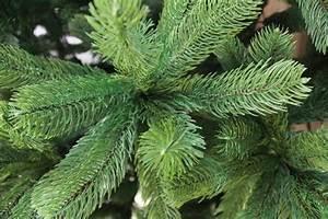 Künstlicher Tannenbaum Wie Echt : k nstlicher weihnachtsbaum 120cm pe spritzguss gr ner premium tannenbaum douglasie christbaum ~ Eleganceandgraceweddings.com Haus und Dekorationen