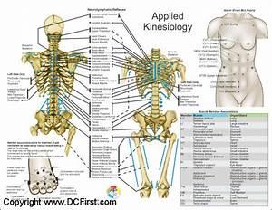 Applied Kinesiology Chart Set