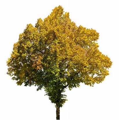 Tree Autumn Leaves Pixel Isolated Max