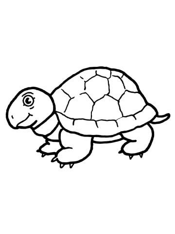 cute tortoise coloring page supercoloringcom