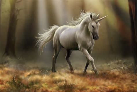unicorns  real  pics animals