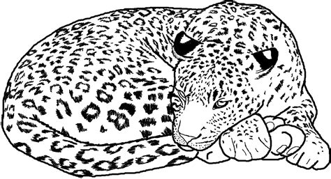 cheetah coloring pages a cheetah drawing coloring pages