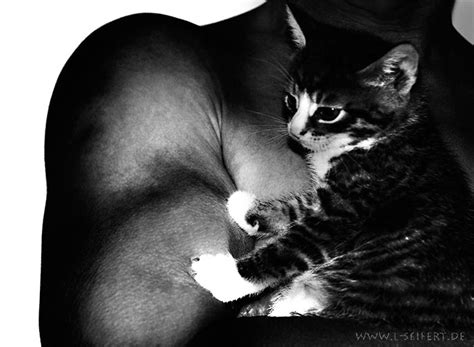 grusskarte mann bilder glueckwuensche katzen glueckwuensche