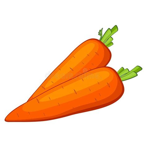 Vector carrot stock photo Image of organic plant