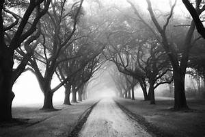 23 Most Beautiful Tree Tunnels in the World. It's ...