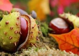 Herbst Kinderspiele Welt de
