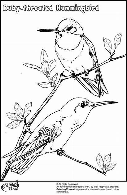 Hummingbird Coloring Pages Birds Drawing Bird Hummingbirds