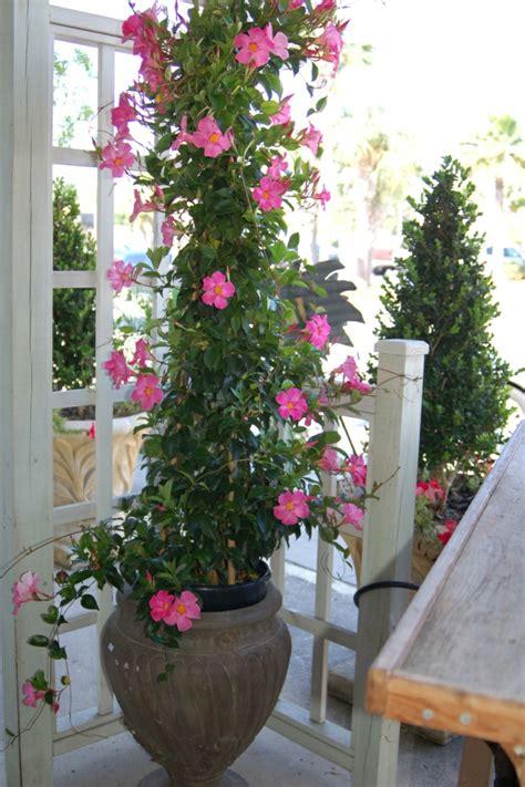 Topfpflanzen Und Die Notwendige Frühlingspflege