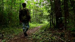 Man walking in the forest - HD stock footage clip