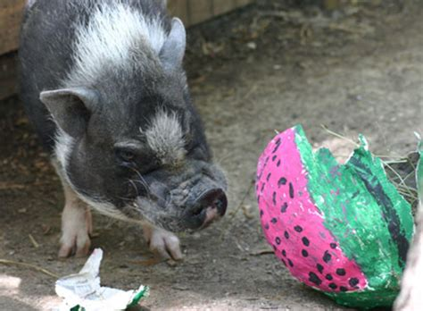 animal enrichment gifts saint louis zoo