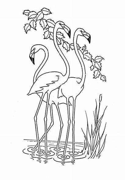 Coloring Animal Pages Flamingo Printable Adults