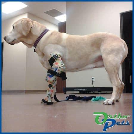 front legforelimbthoracic prosthetics  dogs orthopets