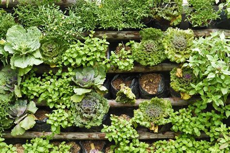 Think Vertical Ideas For The Vertical Garden  Fresh By Ftd