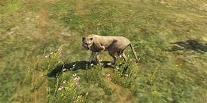 GTA 5 Animals Locations 'Wildlife Photography Guide ...