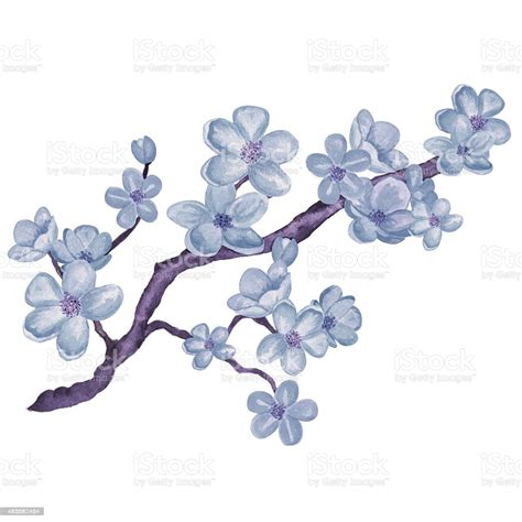 Watercolor Branch Blossom Sakura Blue Cherry Tree With