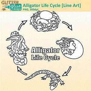 Alligator Life Cycle Clip Art  Animal Group Graphics B U0026w