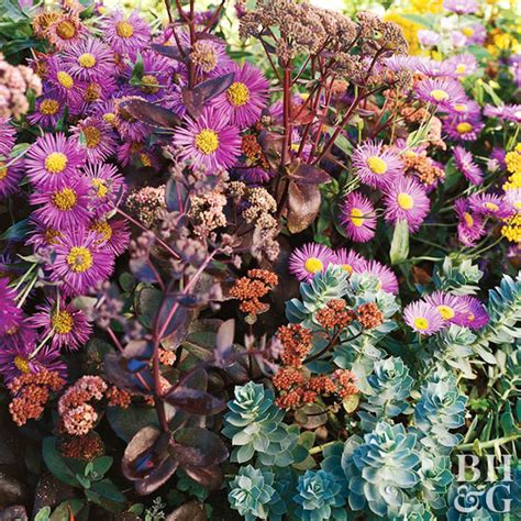 perennial flowers for southern california low maintenance perennials of southern california