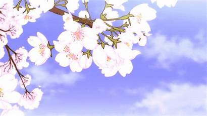 Anime Cherry Gifs Aesthetic Blossom Moving Backgrounds
