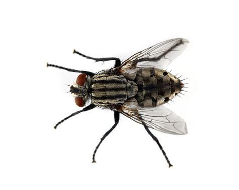 Fly Control  Canton Georgia Termite & Pest Control
