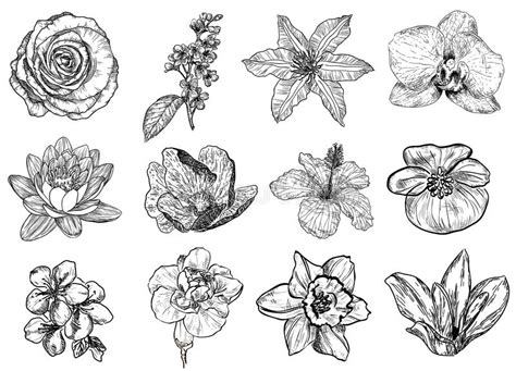vectorillustratie zwart witte bloemen vector illustratie illustratie bestaande uit
