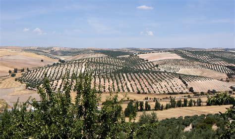 andalusia landscape pinar jalifa sorso wikimedia commons kunnassa wikipedia besuchen spain vacation blueblazer