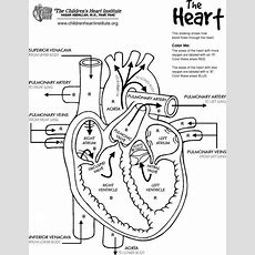 Heart Diagram Blood Flow Worksheet  World Of Diagrams