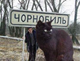 乌克兰巨猫_360百科