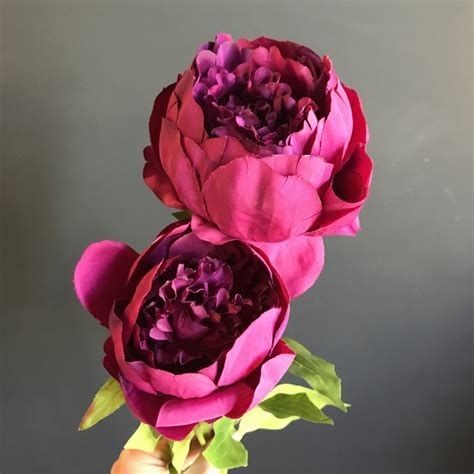 gorgeous purple double peonies heavenly homes gardens