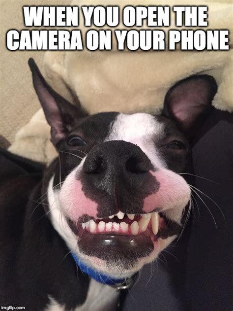 Dog On Phone Meme - he wasn t ready imgflip
