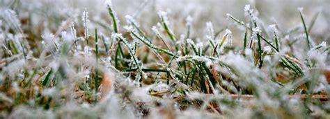 rasenpflege nach dem winter rasenpflege im bzw nach dem winter rasen pflegen im februar