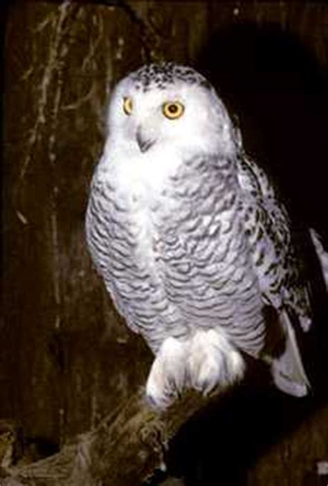 owl knowbc the leading source of bc information