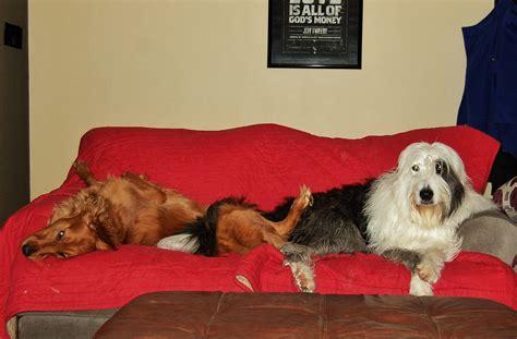 dogs    valentine housemydog blog