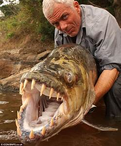 Jeremy Wade's goliath tigerfish: British fisherman ...