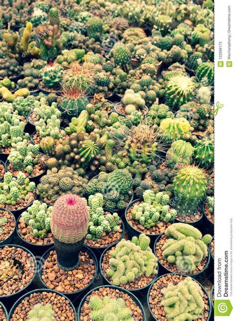 Cactus Planted In A Botanical Garden At Thailand Stock ...