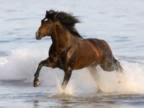 Beautiful Running Horse