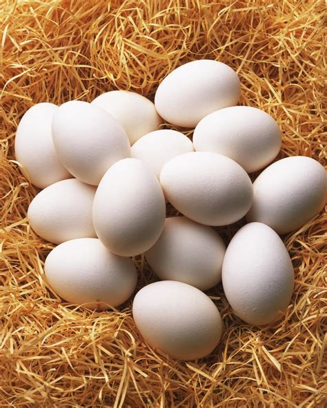 ما هي فوائد البيض؟