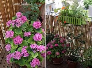 Garten fraulein silvia bienen mitten auf dem balkon for Französischer balkon mit bienen garten