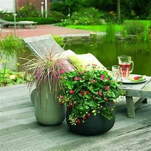 Plant De Fraise : fraisier en pot conseil culture et plantation ~ Premium-room.com Idées de Décoration