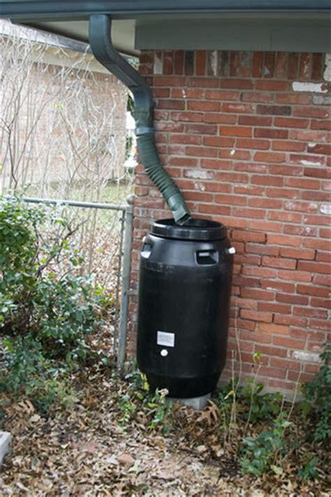 Rain Barrel Verbena