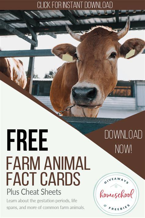 FREE Farm Animal Cheat Sheets & Fact Cards - Homeschool ...