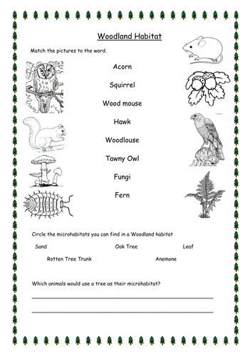 woodland habitat worksheets differentiated
