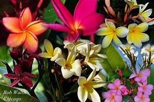 Tropische Pflanzen Kaufen : f r alle deutsch sprechenden g rtner die in tropische pflanzen interessiert sind information ~ Watch28wear.com Haus und Dekorationen